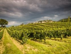 vignoble en Provence