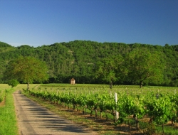 vignoble pays de la Garonne