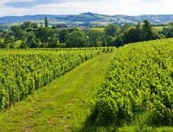 vignoble en Bourgogne