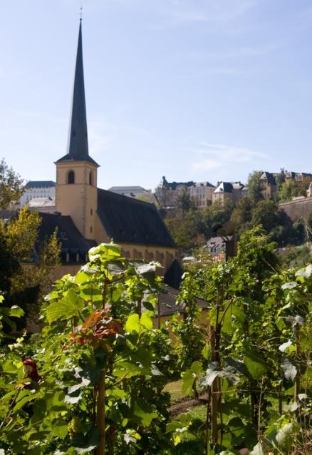 vigne dans un village luxembourgeois