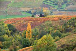 Beaujolais-automne-Fotolia-aterrom.jpg