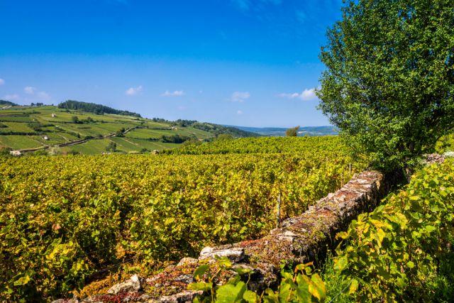 Bourgogne-Fotolia-Eleonore-H-.jpg