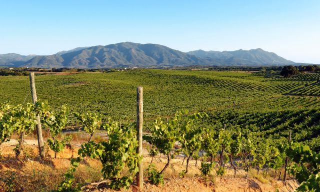 Corse-vignoble-Fotolia-hassan-bensliman.jpg