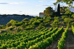 Provence-Vaucluse-Fotoli-Oleg-Znamenskiy.jpg
