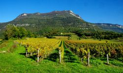 Savoie-Fotolia-savoieleysse.jpg