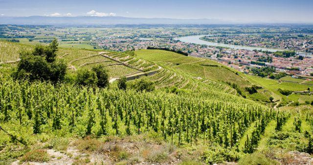 vallee-rhone-tain-hermitage-Fotolia-PHB.cz.jpg