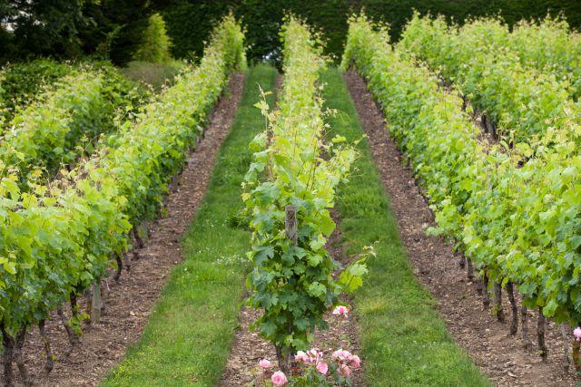 vignoble-loire-sous-region-appellations-regionales-wjarek.jpg