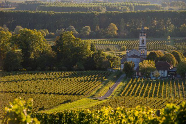 vignoble-loupiac-vins-blancs-liquoreux-bordelais-freeprod.jpg