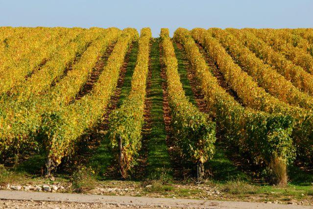 vignoble-touraine-loire-sous-region-fotoloo.jpg
