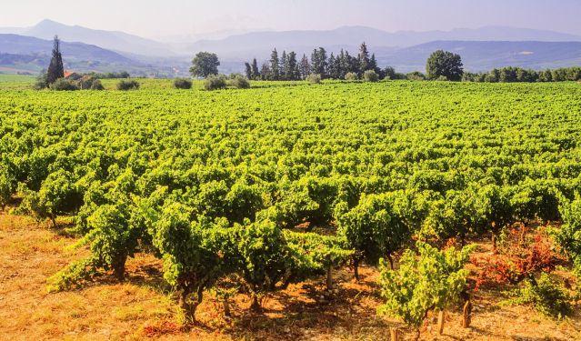 vins-doux-naturels-rhone-sous-region-davidhughes-fotolia.com.jpg