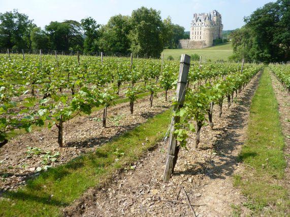 brissac-anjou-saumur-sous-region-loire-laurely.jpg