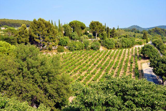 vignoble-provence-basse-vallee-rhone.jpg