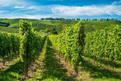 regions-vins-Luxembourg-sabino.parente.jpg